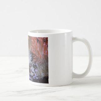 Clownfish Coffee Mugs