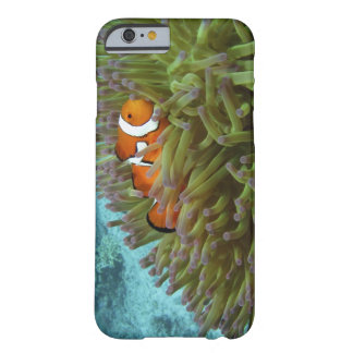 Clownfish occidental (ocellaris del Amphiprion), Funda Barely There iPhone 6