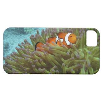 Clownfish occidental (ocellaris del Amphiprion), iPhone 5 Carcasa