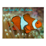 Clownfish on the Great Barrier Reef Postcard
