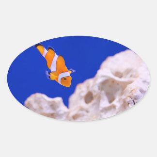 Clownfish Pegatina Ovalada