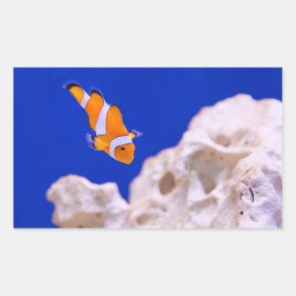 Clownfish Pegatina Rectangular