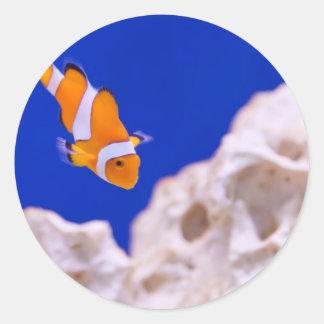 Clownfish Pegatina Redonda