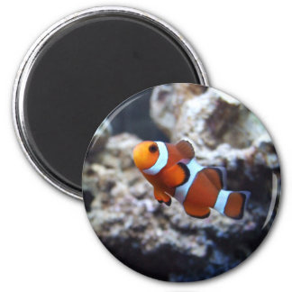 Clownfish Photography Magnet