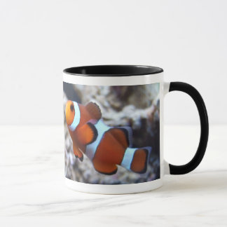 Clownfish Photography Mug
