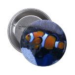 Clownfish Pin