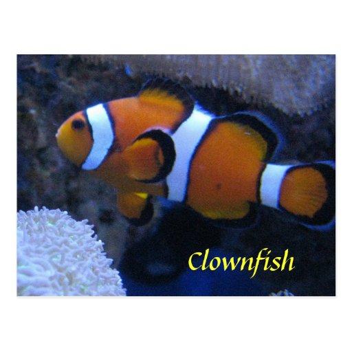 Clownfish Post Card