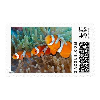 Clownfish Postage