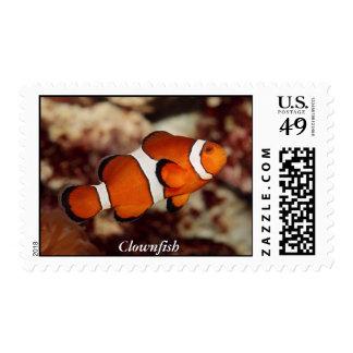 Clownfish Postage Stamp