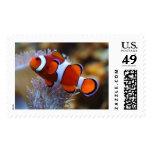 Clownfish Postage Stamp III