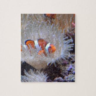 Clownfish Puzzles
