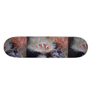 Clownfish Skate Deck