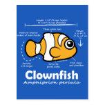 Clownfish Statistics Postcard