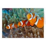 Clownfish Tarjeta De Felicitación