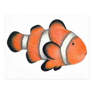 Clownfish Postal