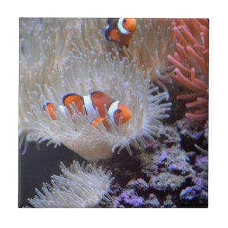 Clownfish Tile