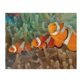Clownfish Wood Wall Art