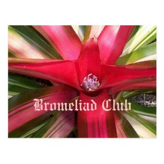 Club de Bromeliad Postales