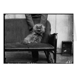 Club del gato de la exposición - Mondial 493 Tarjeta De Felicitación