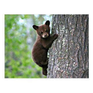 Club del oso que sube un árbol postales