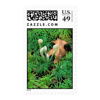 Clubmoss Stamps