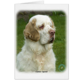 Clumber Spaniel 9Y003D-101 Greeting Cards