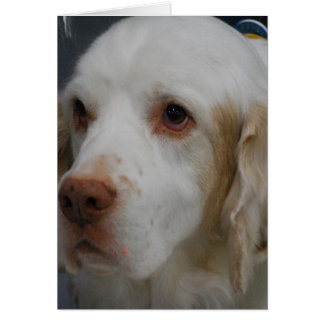Clumber Spaniel Dog  Greeting Cards
