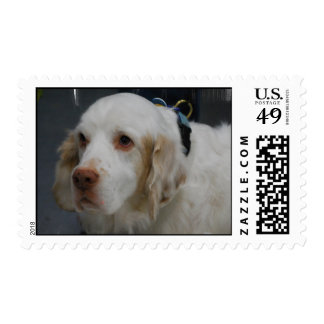 Clumber Spaniel Dog Postage Stamps