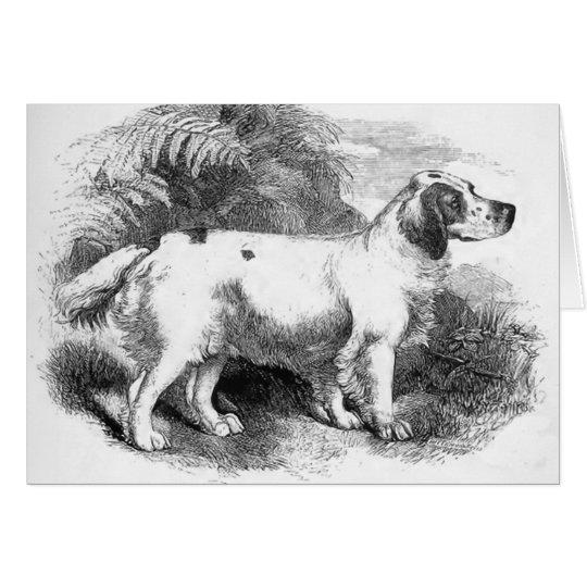 Clumber Spaniel Vintage Dog Illustration Card