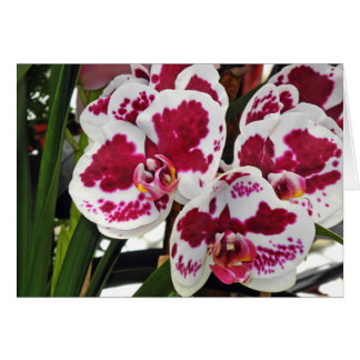 Cluster Gorgeous Velvety White and Purple Orchids Card