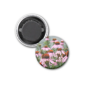 Cluster of coneflowers magnet