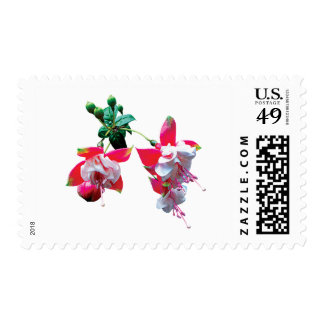 Cluster of Fuschia Postage