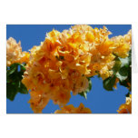 Cluster of Golden Bougainvillea Card