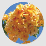 Cluster of Golden Bougainvillea Classic Round Sticker