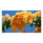 Cluster of Golden Bougainvillea Photo Print
