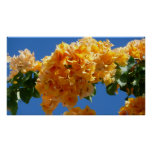 Cluster of Golden Bougainvillea Poster