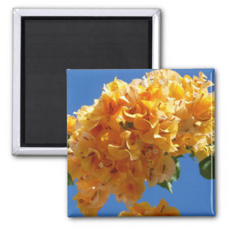 Cluster of Golden Bougainvillea Tropical Flowers 2 Inch Square Magnet