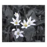 Cluster of Mini Flowers Macro Photo BW/Color Print