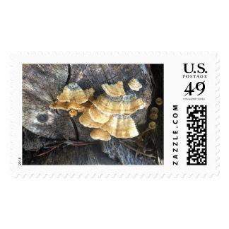 Cluster of Mushrooms Postage Stamp