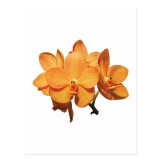 Cluster of Orange Orchids Postcard