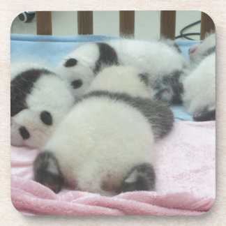 Cluster Of Panda Cubs Coaster