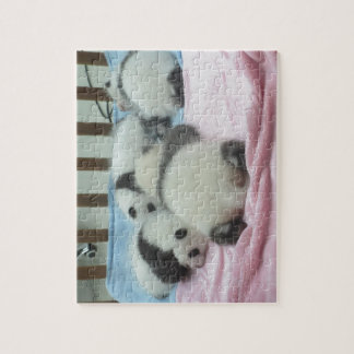 Cluster Of Panda Cubs Jigsaw Puzzle