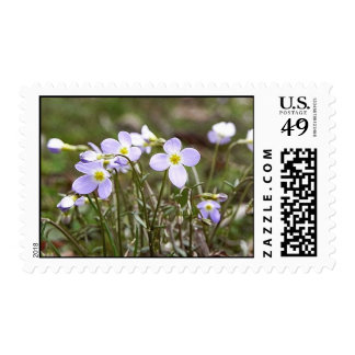 Cluster Of Tiny Bluets Stamp