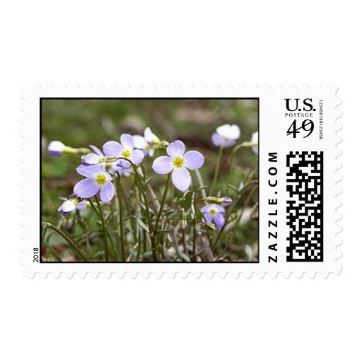 Cluster Of Tiny Bluets Stamps