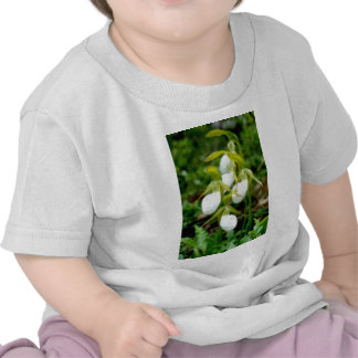 Cluster of white lady slippers tshirts