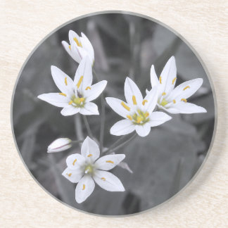 Cluster of Wildflowers Macro Photo BW/Color Beverage Coasters