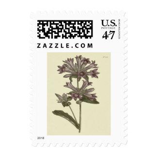 Clustered Bellflower Botanical Illustration Stamp