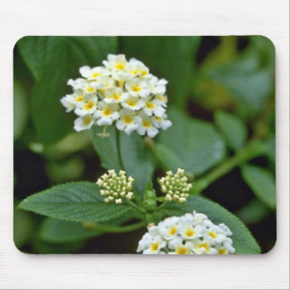 Clustered White Flowers With Yellow Centers flower Mouse Pad