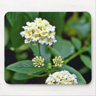 Clustered White Flowers With Yellow Centers Mouse Pad