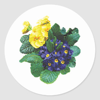 Clusters of Purple and Yellow Primroses Round Sticker